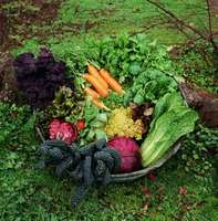 Fall-garden-basket