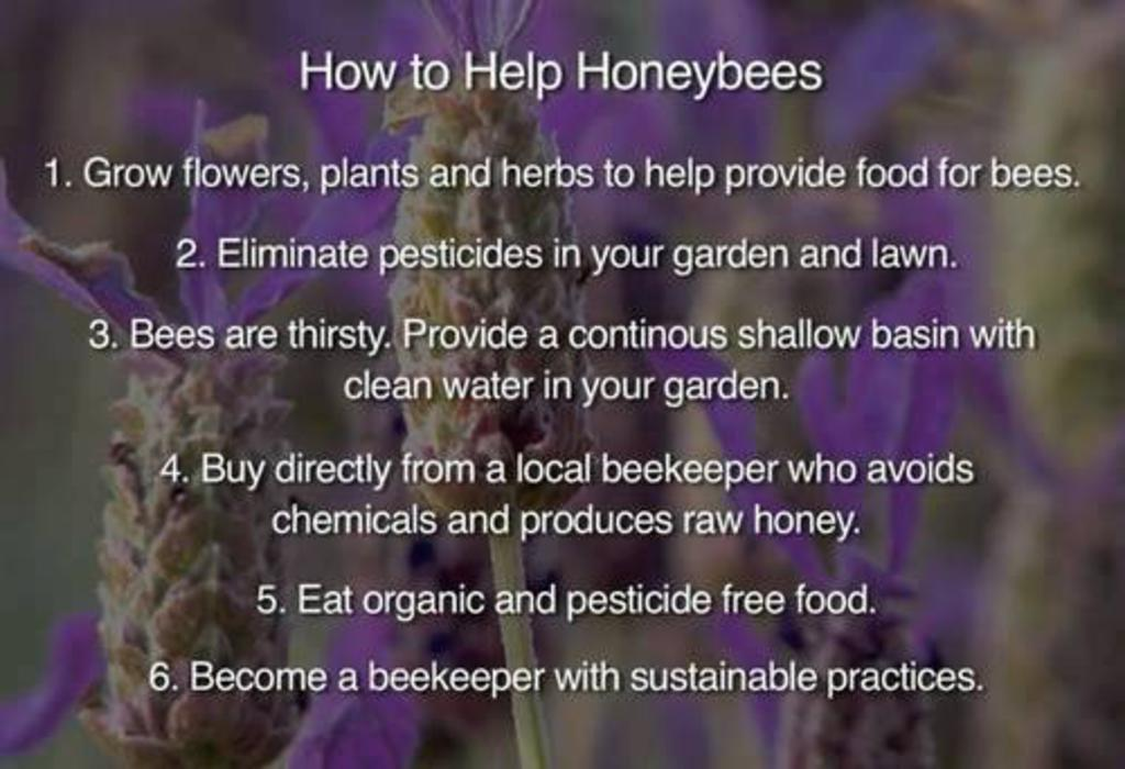 How_to_help_honey_bees