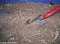 Chicken_litter_compost